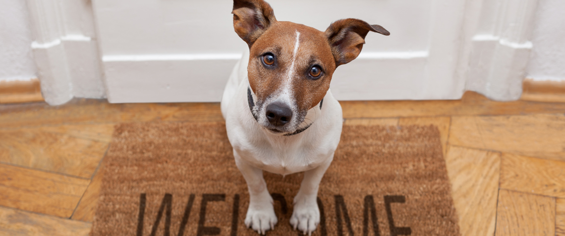 Should landlords allow dogs?